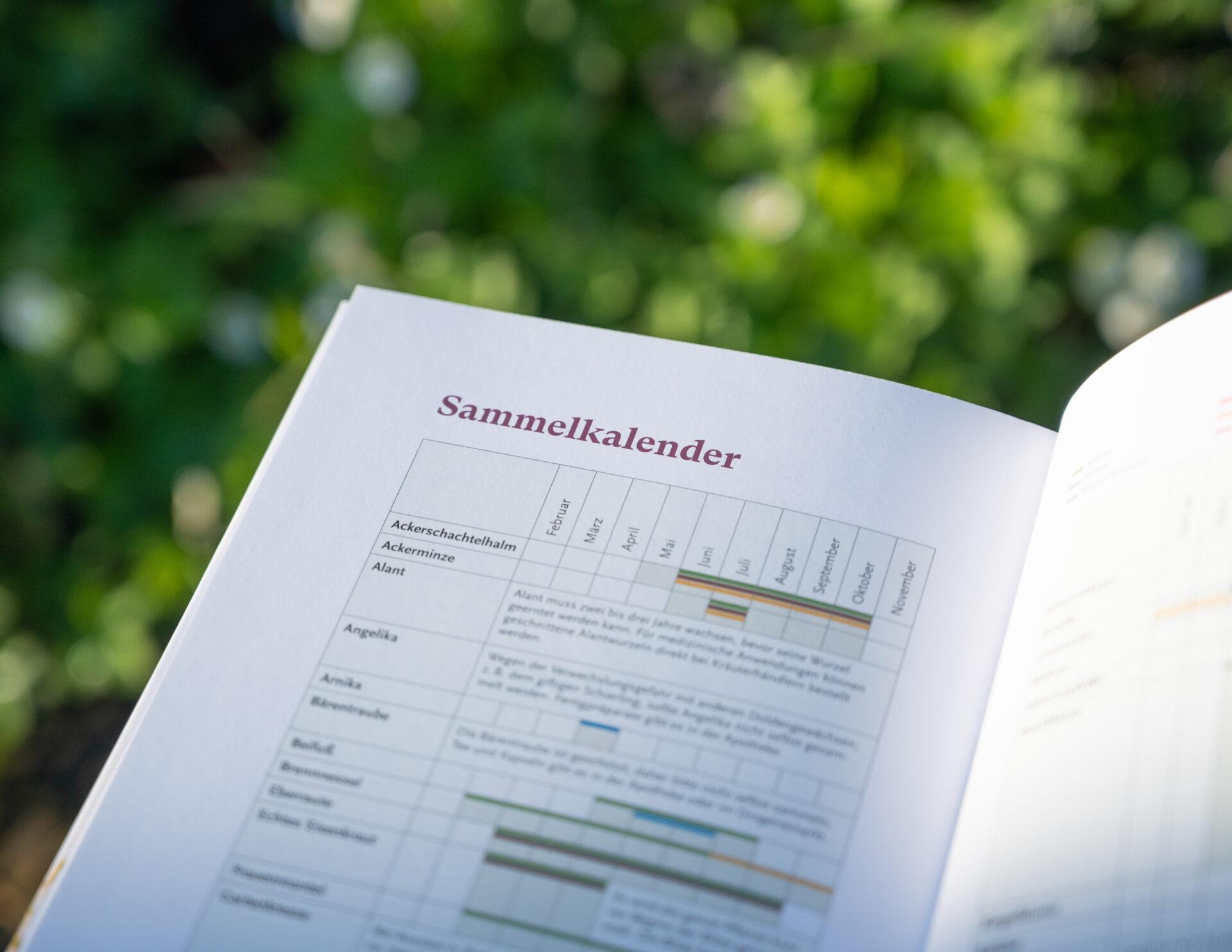 Buch über Kräuter für Frauen liegt im Kräutergarten